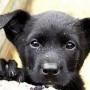 Выставка бездомных животных во Владивостоке