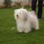 Выведена новая порода собак - ОДИС