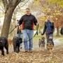 В Дубае открыт парк для выгула собак