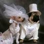 Красноярские свадьбы: теперь через Интернет