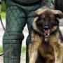 Охранные собаки – это не игрушки!