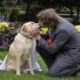Молодой австралиец сочетался браком с собакой