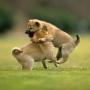 День развлечений для японских собак от компании Seibu