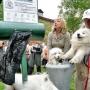 Для столичных собак обустраивают туалеты