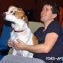 Собаки-киноманы