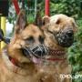 Новые правила для животных в Софии