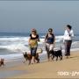 На пляж — всей семьёй!