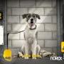 Гуляйте с собакой… по Интернету