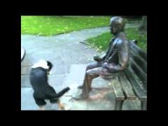 Собака играет с памятником!