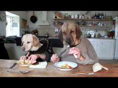 Обед двух собак