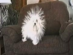 Собака и статическое электричество