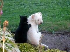 Особый массаж для собаки
