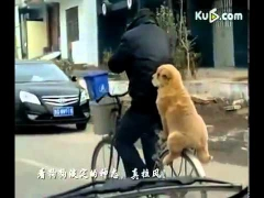 Собака на велосипеде