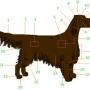 Строение тела собак