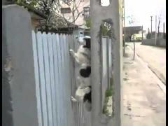 Собака лезет по забору