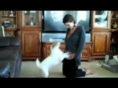 Собака-помощница