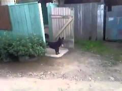 Собака и калитка