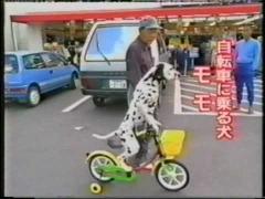 Собака катается на велосипеде