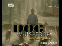 Переводчик с собачьего. 3 серия смотреть онлайн