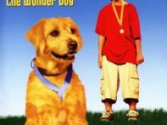 Ленни — чудо собака смотреть онлайн