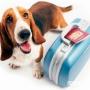 Особенности перевозки собак в машине, самолете, поезде