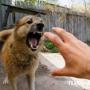 Бешенство у собак. Как не заразиться от своего четвероногого друга?