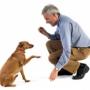 Возможные ошибки дрессировщика собак