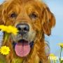 Что необходимо для содержания и чистки собак