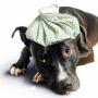 Как остановить рвоту у собаки