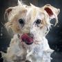 Как сушить собаку после купания?
