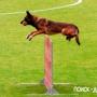 Вырабатываем навык преодоления препятствий у собаки