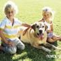 Как приучить ребенка ухаживать за своей собакой?