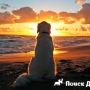 Отдыхаем на море с собакой: что важно знать?