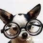 Животные-дальтоники: особенности зрения собак