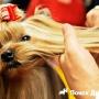 Правила ухода за шерстью собак в зависимости от породы