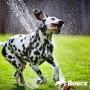 Как правильно ухаживать за собаками в жаркое время года