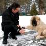 Психология собаки: как подготовиться к выставке?