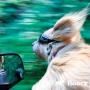 Как правильно перевозить собаку в автомобиле?