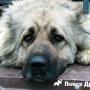Собака в депрессии: лечим стресс у животного