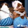 Первая течка у собаки: симптомы, изменения в поведении