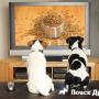 Характер собаки: наследственность или окружение?