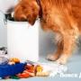 Собака «пылесосит». Что делать?