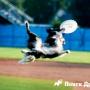 Правила и виды игры во фрисби с собакой