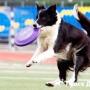 Следим за здоровьем собаки-спортсмена
