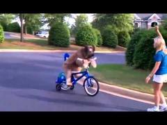 Трехколесный велосипед для собаки