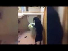 Собака на унитазе!