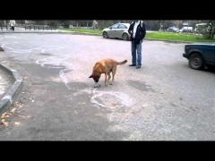 Собака-рисовака!