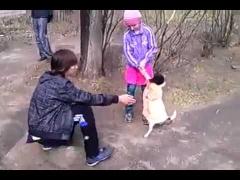 Собака ходит как человек!