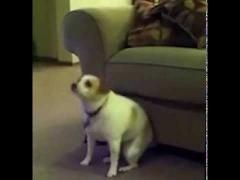 Собака-рэпер!