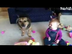 Собака глотающая мыльные пузыри